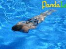 你知道为什么游泳才是最好的运动吗?